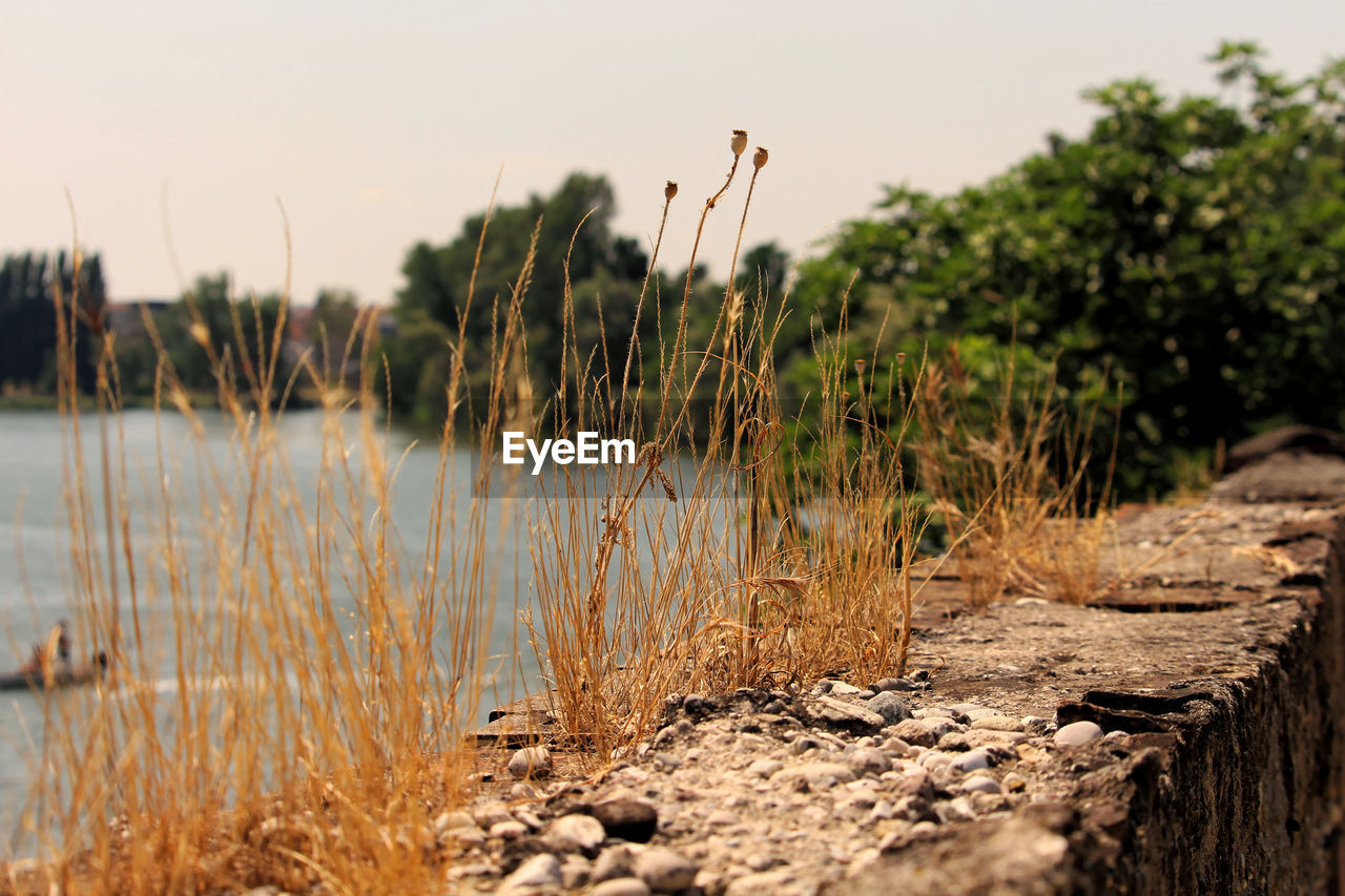 plant, growth, nature, tranquility, water, no people, beauty in nature, sky, tranquil scene, focus on foreground, land, day, scenics - nature, outdoors, selective focus, lake, tree, grass, non-urban scene