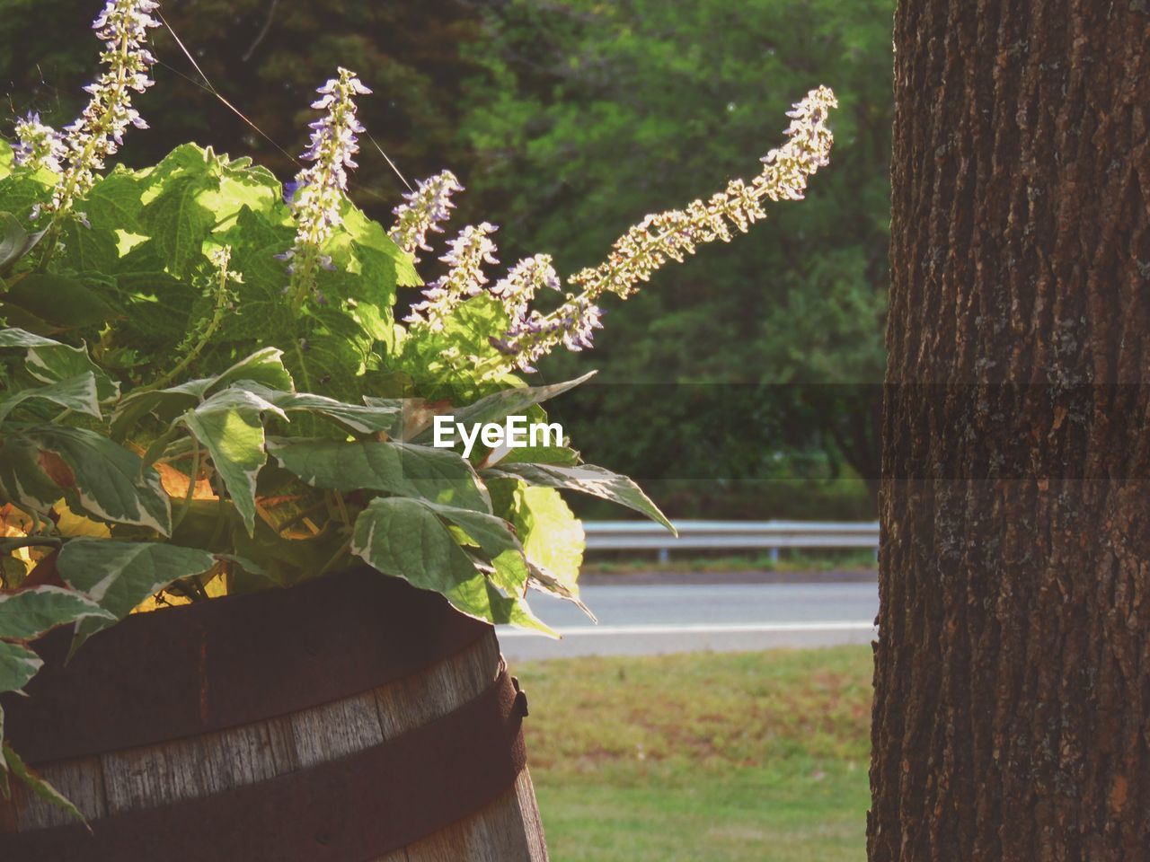 growth, nature, plant, beauty in nature, no people, day, outdoors, tree, freshness, close-up, leaf, flower, fragility