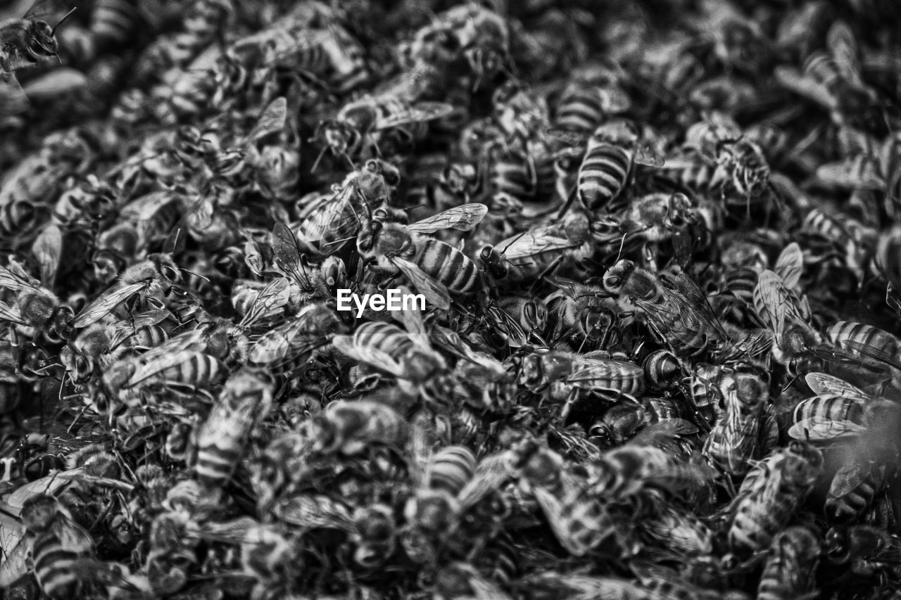 full frame, selective focus, abundance, no people, backgrounds, large group of animals, nature, invertebrate, food, close-up, food and drink, insect, animal themes, animal, group of animals, large group of objects, day, still life, animals in the wild, high angle view, tea leaves