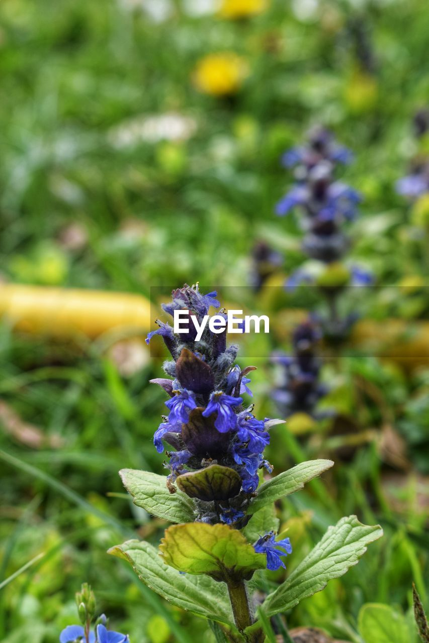 flowering plant, flower, plant, vulnerability, freshness, fragility, growth, beauty in nature, close-up, petal, purple, focus on foreground, nature, day, flower head, inflorescence, no people, green color, outdoors, botany, pollination