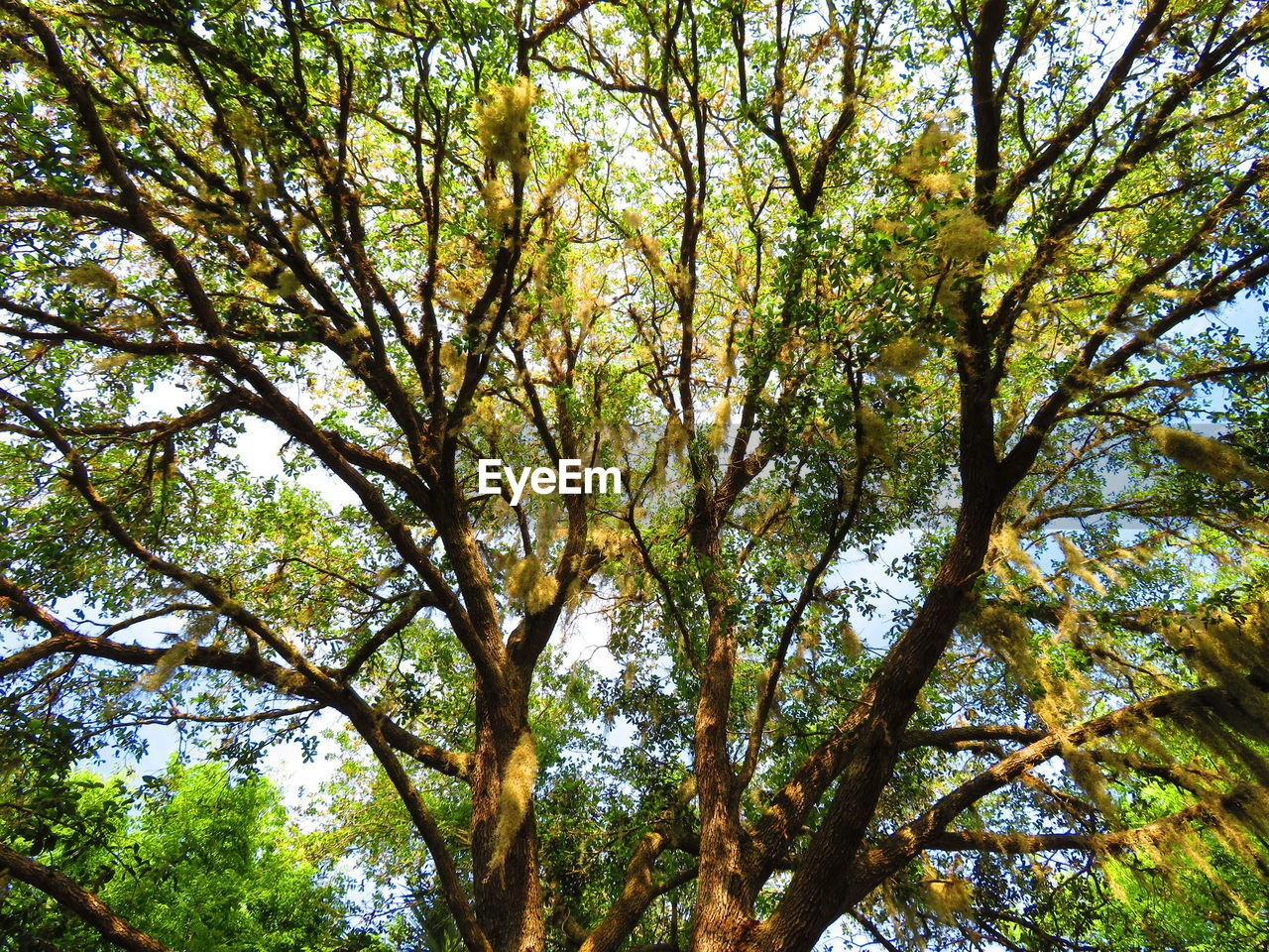 tree, plant, beauty in nature, low angle view, growth, nature, day, tranquility, branch, outdoors, green color, tree trunk, no people, tree canopy, trunk, full frame, land, forest, backgrounds, sunlight