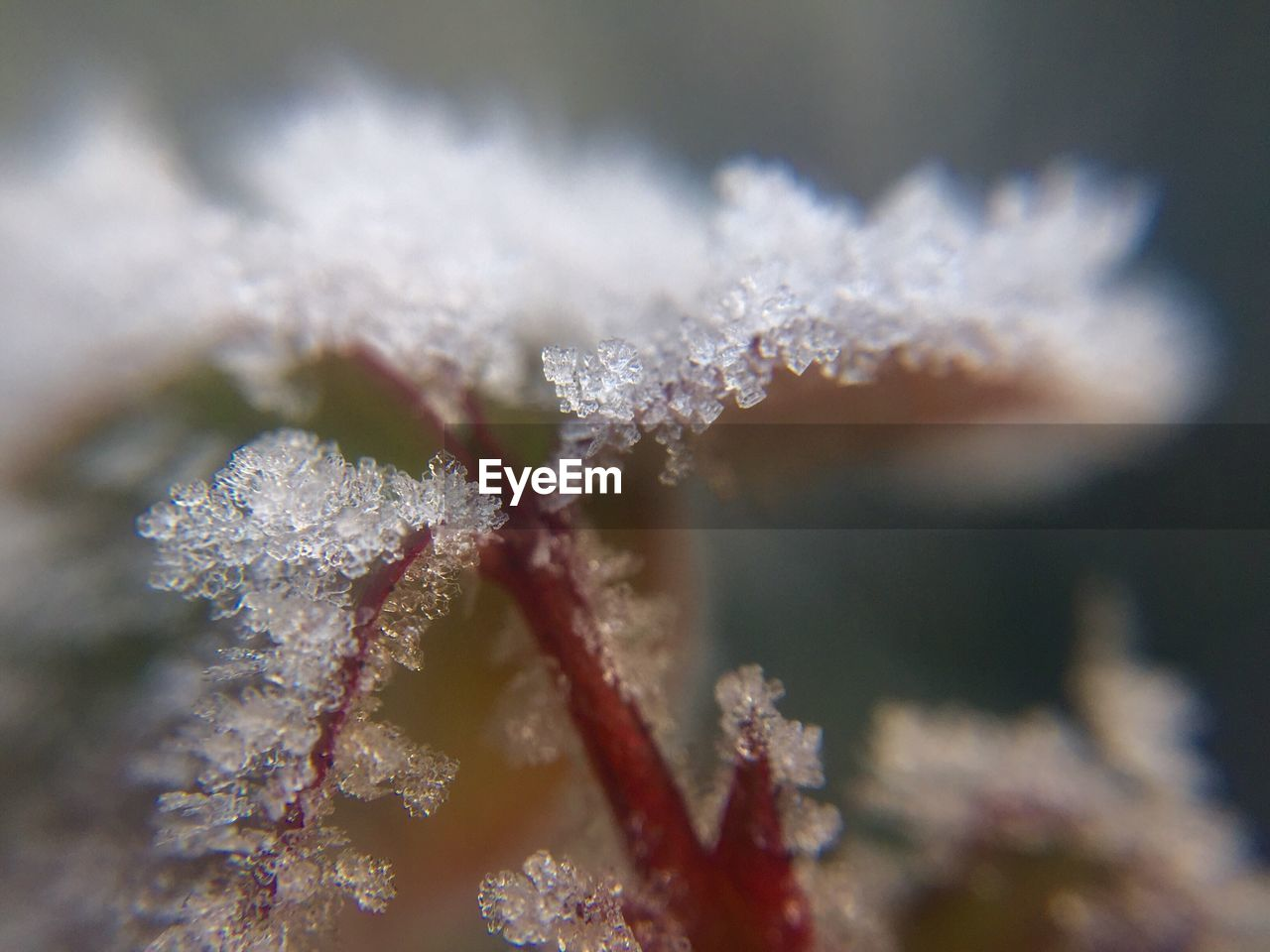 cold temperature, winter, snow, ice, frozen, nature, close-up, weather, white color, no people, beauty in nature, frost, day, ice crystal, snowflake, outdoors, water, underwater, undersea, animal themes