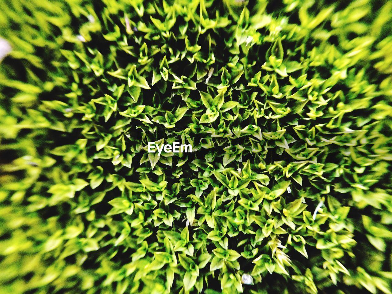 DEFOCUSED IMAGE OF GREEN PLANTS