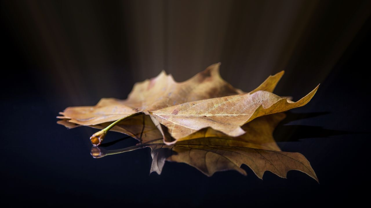 leaf, plant part, autumn, change, nature, dry, close-up, no people, maple leaf, fragility, vulnerability, leaves, leaf vein, beauty in nature, plant, outdoors, day, focus on foreground, falling, selective focus, natural condition, fall, dried