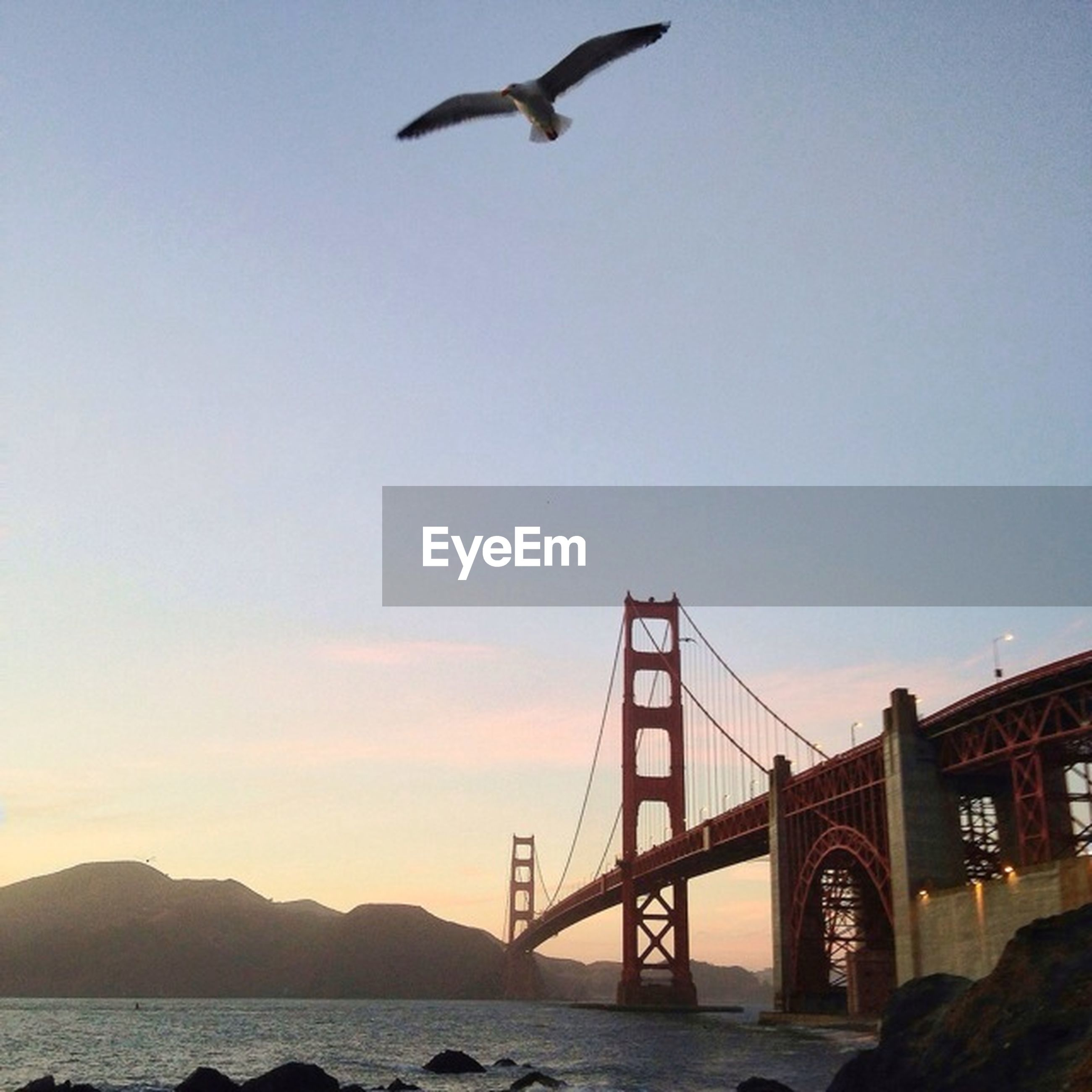 bird, flying, animal themes, connection, bridge - man made structure, built structure, animals in the wild, architecture, wildlife, one animal, transportation, engineering, sky, seagull, clear sky, low angle view, bridge, mid-air, water, outdoors