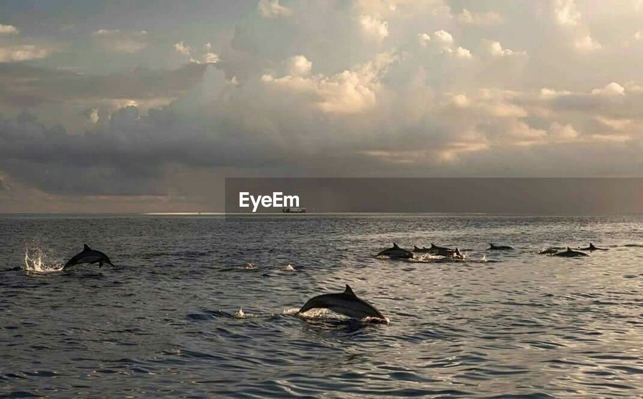sea, nature, beauty in nature, animals in the wild, animal themes, water, cloud - sky, animal wildlife, scenics, sky, no people, waterfront, tranquility, sunset, horizon over water, one animal, sea life, swimming, outdoors, aquatic mammal, mammal, whale, humpback whale, animal fin, day