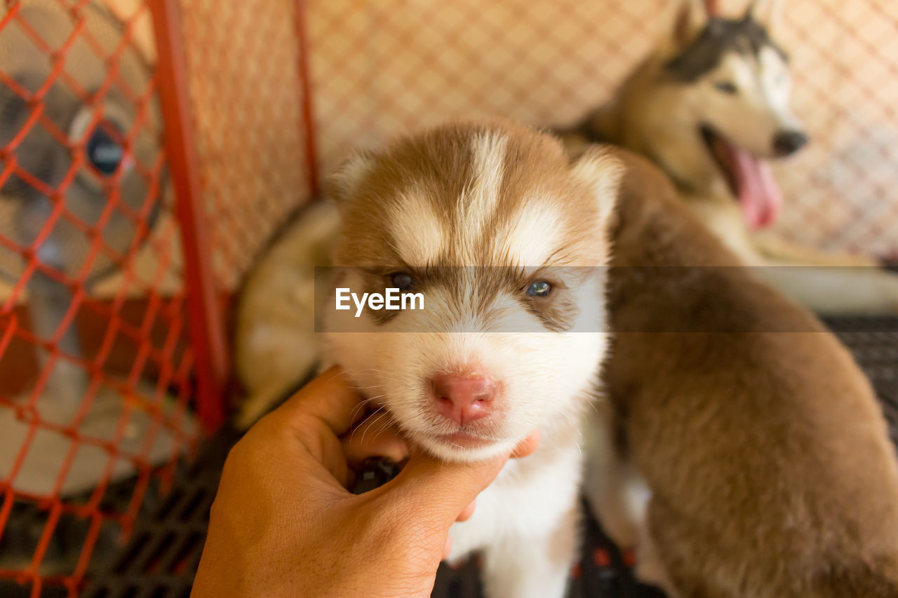 mammal, pets, domestic animals, domestic, human hand, one person, one animal, real people, hand, vertebrate, human body part, unrecognizable person, holding, personal perspective, close-up, focus on foreground, body part, finger, pet owner