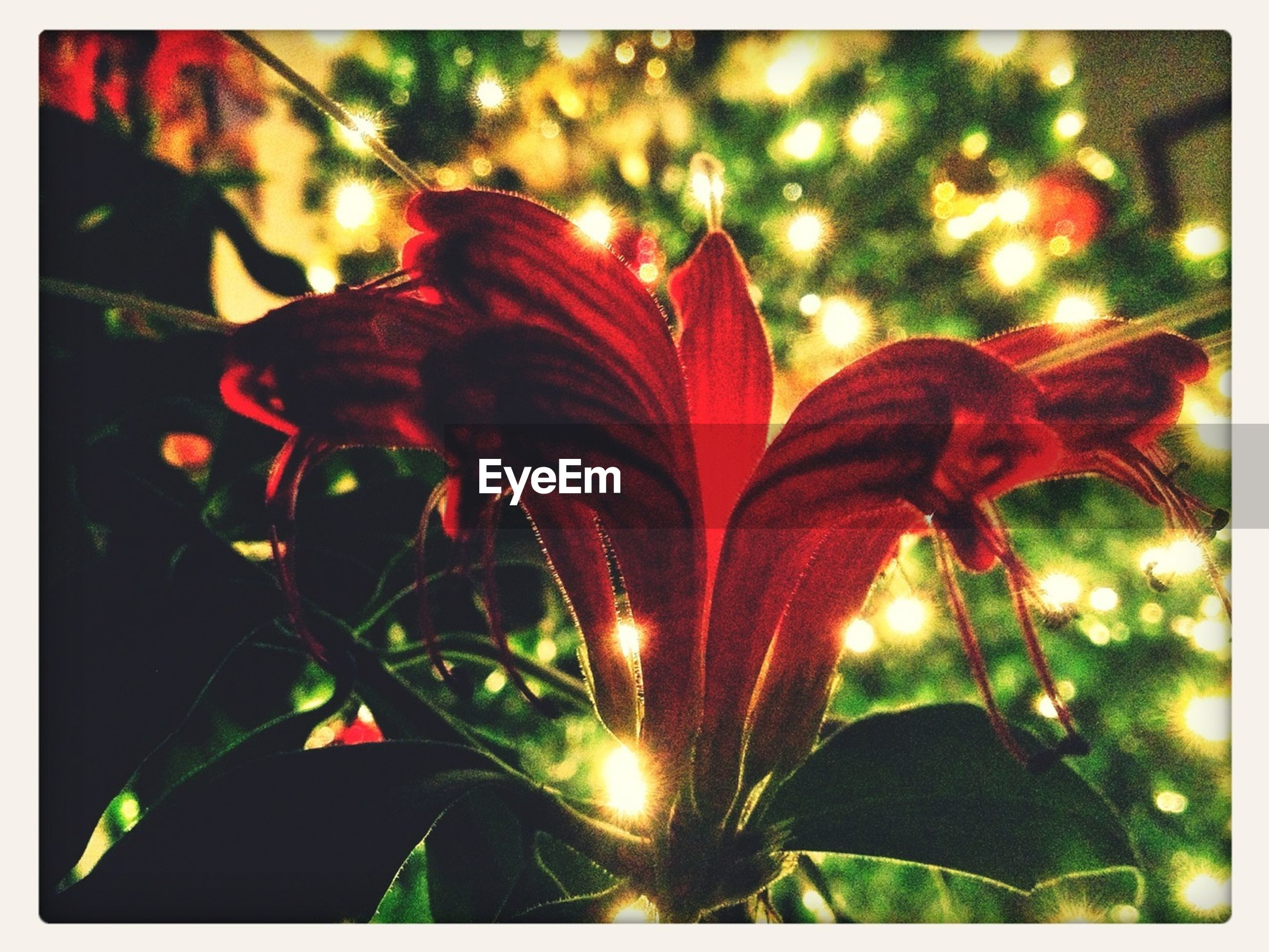 transfer print, leaf, growth, plant, close-up, auto post production filter, red, nature, focus on foreground, freshness, beauty in nature, sunlight, fragility, flower, outdoors, day, no people, sun, lens flare, selective focus