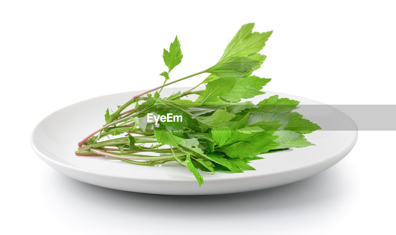 studio shot, white background, food, food and drink, freshness, green color, indoors, plate, healthy eating, no people, still life, wellbeing, close-up, vegetable, ready-to-eat, herb, leaf, plant part, cut out, bowl, coriander, crockery