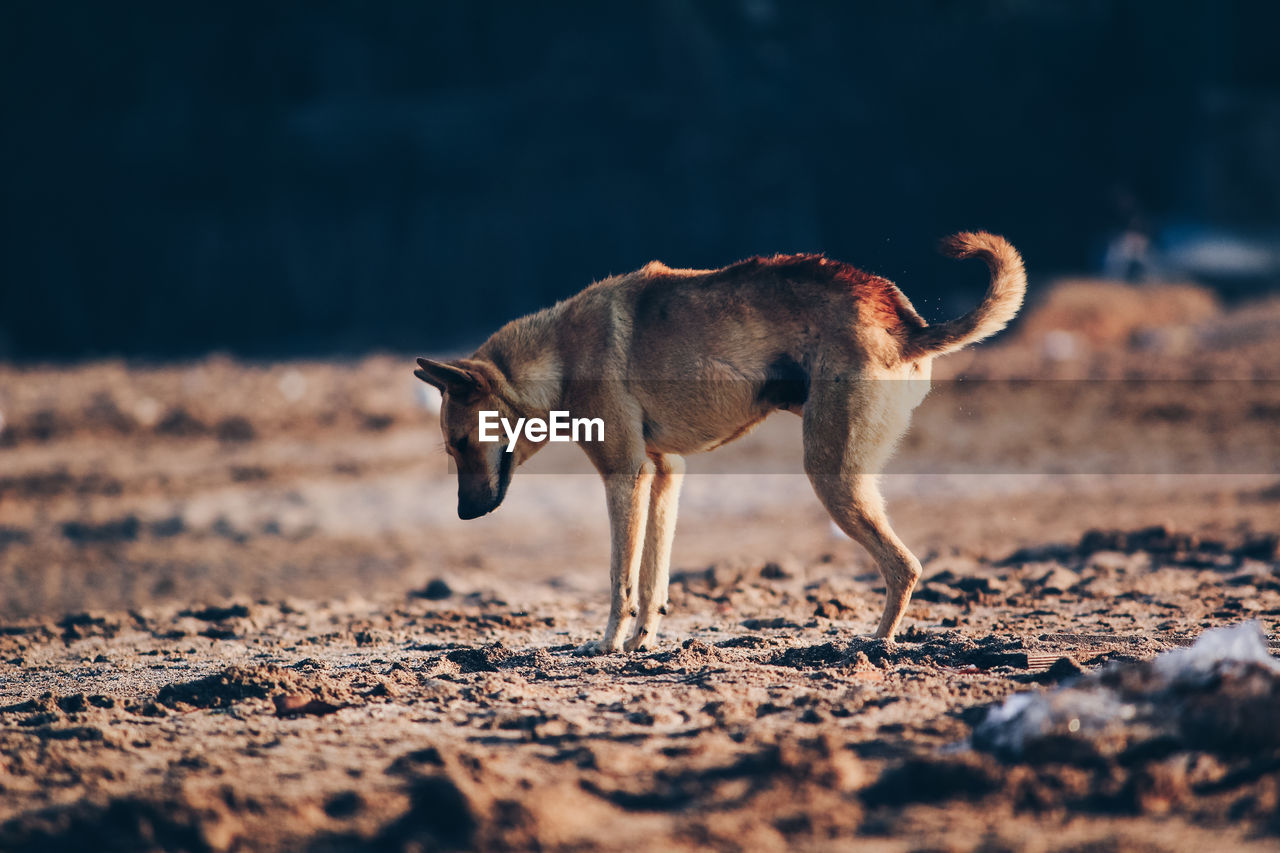 SIDE VIEW OF A DOG ON THE FIELD