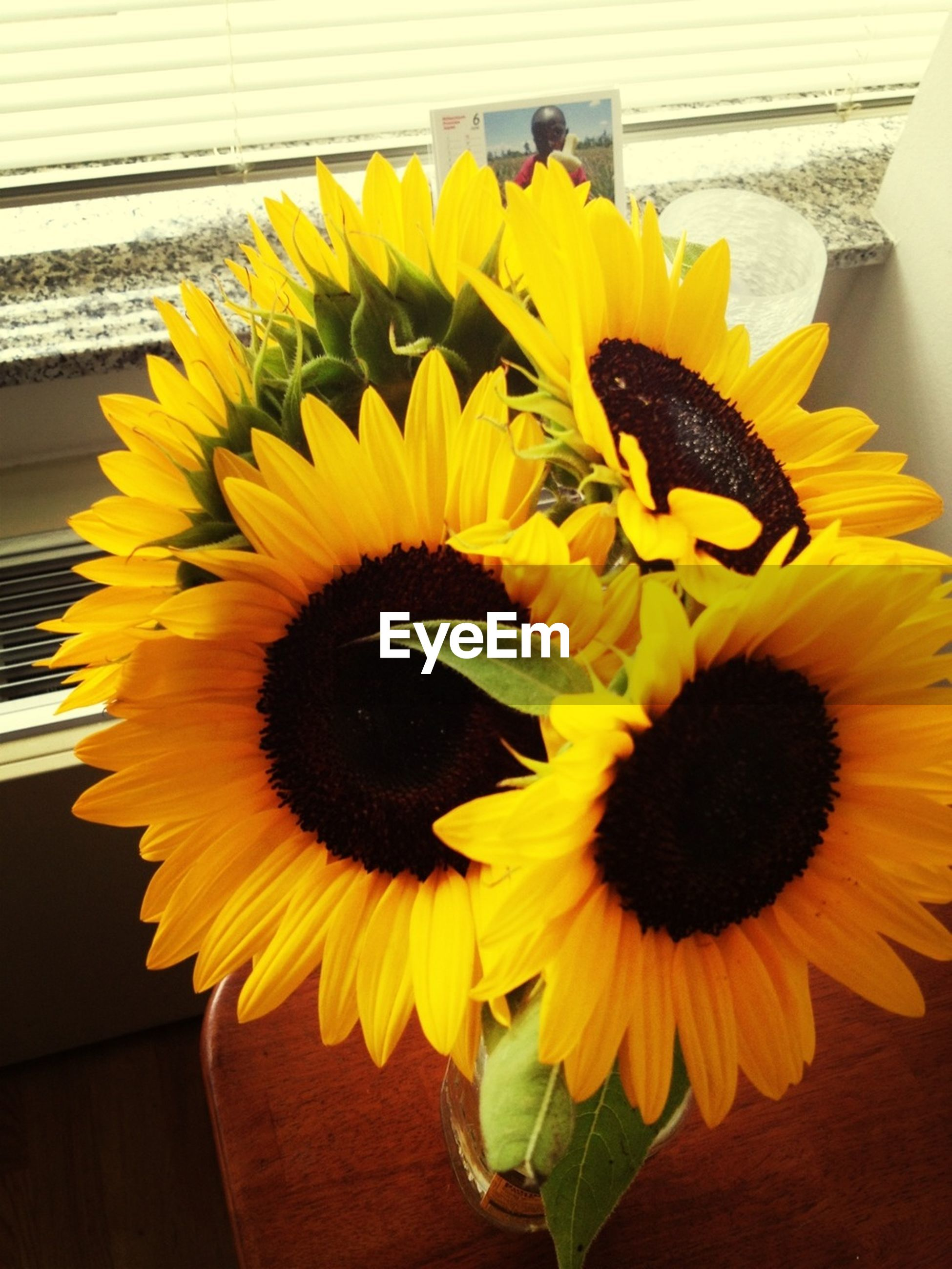 flower, yellow, petal, freshness, flower head, fragility, sunflower, pollen, beauty in nature, indoors, close-up, growth, plant, nature, potted plant, blooming, high angle view, leaf, in bloom, no people