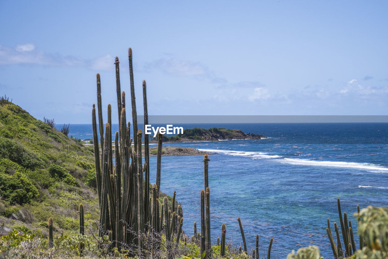 Cactus Plants Growing By Sea Against Sky