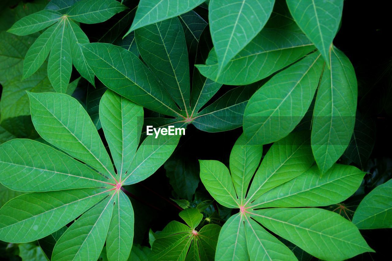 leaf, plant part, green color, growth, plant, close-up, nature, no people, beauty in nature, full frame, high angle view, directly above, freshness, backgrounds, day, food and drink, outdoors, leaf vein, food, leaves, herb