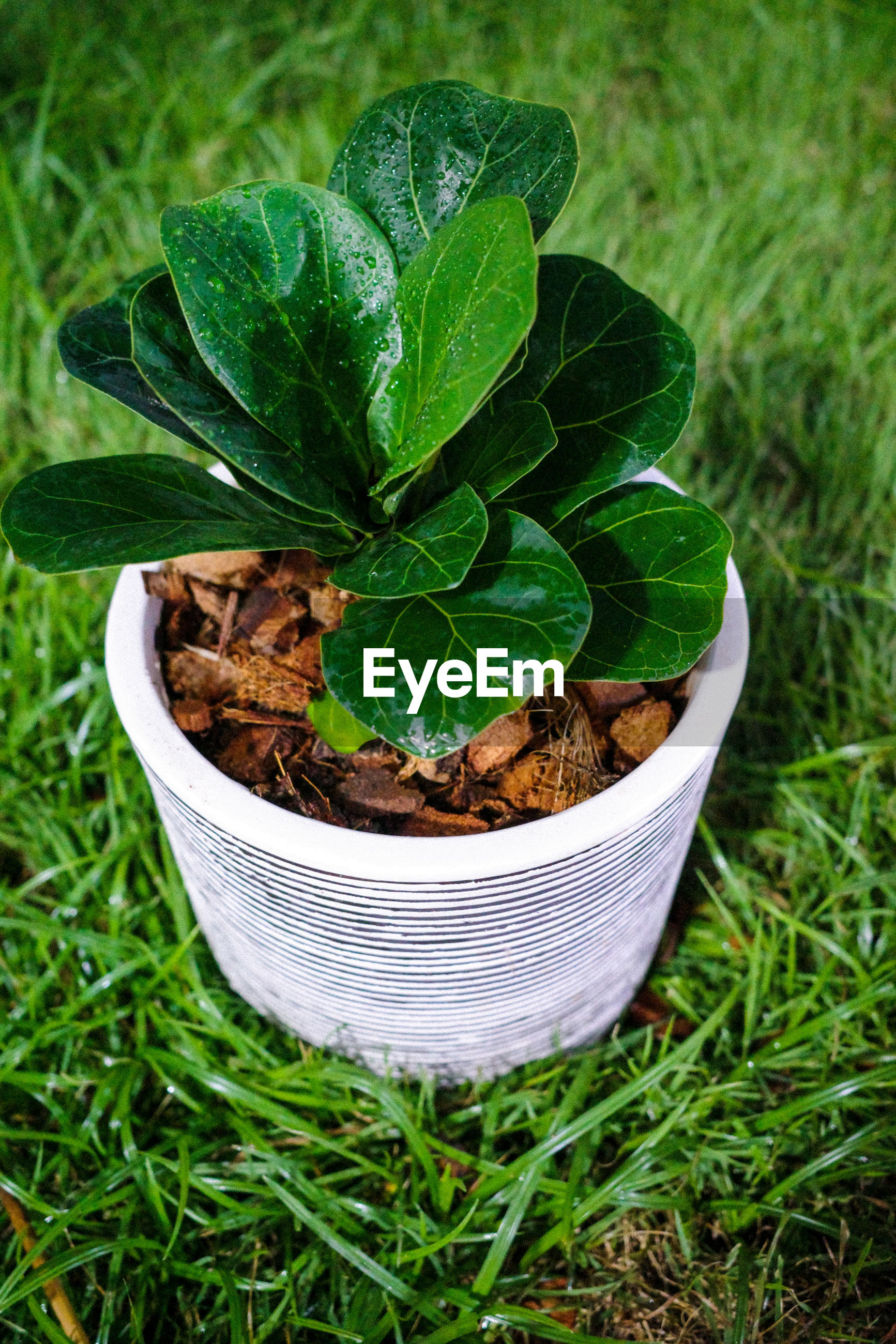 HIGH ANGLE VIEW OF POTTED PLANT GROWING ON FIELD