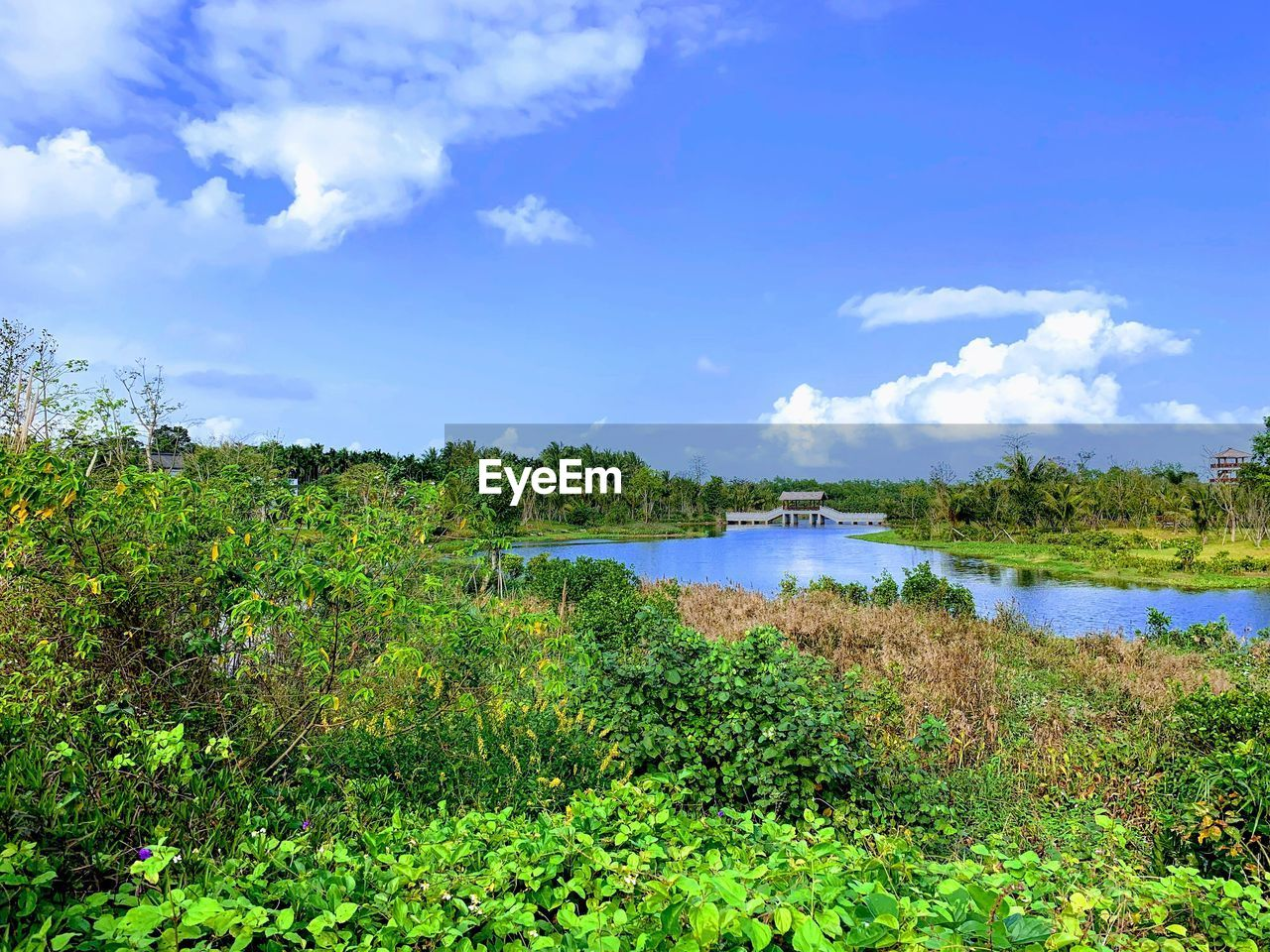 plant, water, sky, tranquility, scenics - nature, cloud - sky, tree, beauty in nature, tranquil scene, growth, nature, green color, day, lake, no people, non-urban scene, land, outdoors
