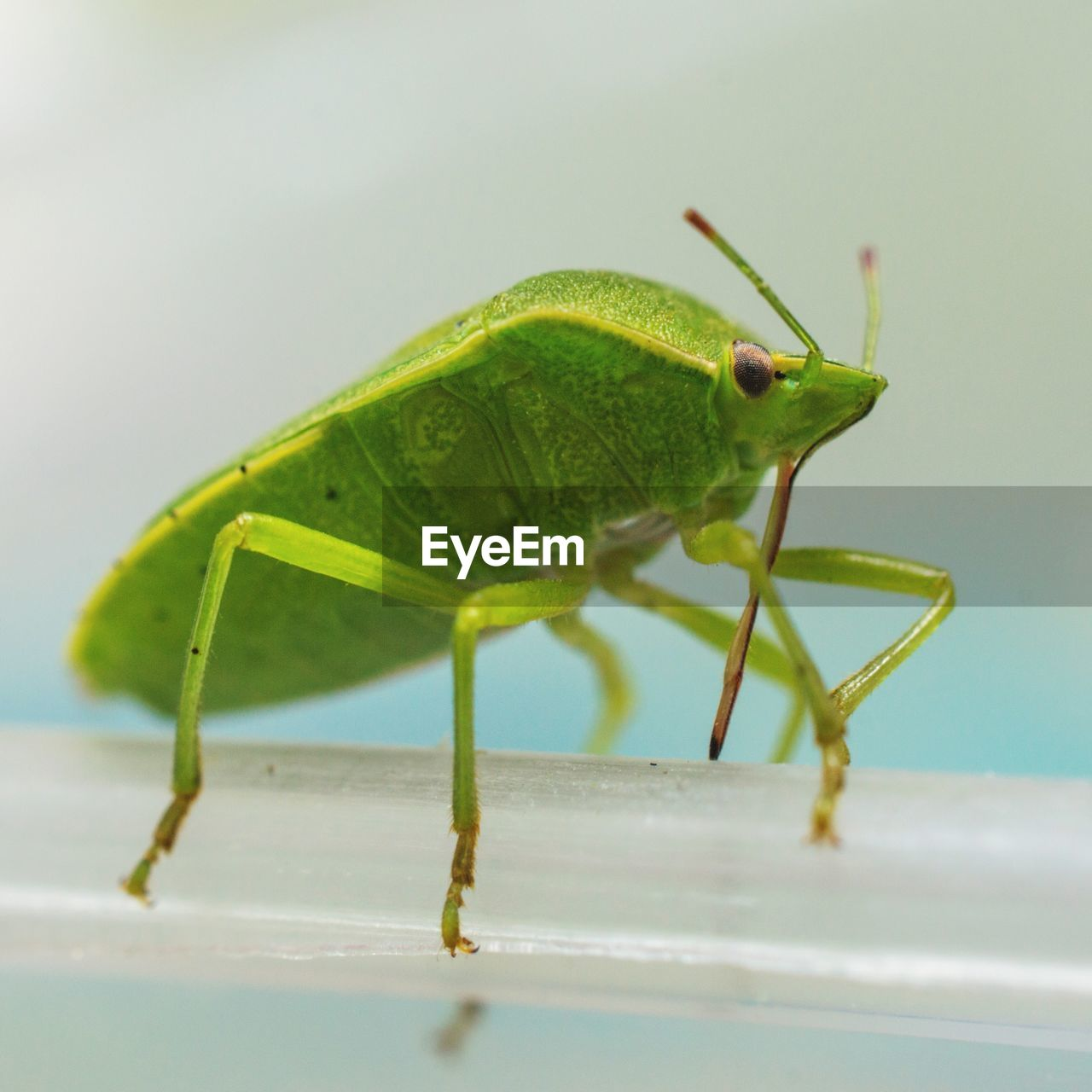 invertebrate, insect, green color, animal themes, animal, animal wildlife, one animal, animals in the wild, close-up, animal antenna, grasshopper, no people, animal body part, selective focus, zoology, nature, side view, day, full length, focus on foreground, animal eye