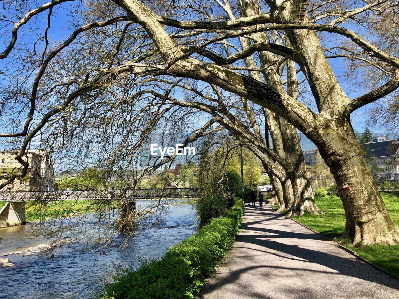 tree, plant, nature, day, water, sunlight, shadow, trunk, transportation, tree trunk, no people, direction, the way forward, branch, outdoors, tranquility, road, sky, river, diminishing perspective, treelined