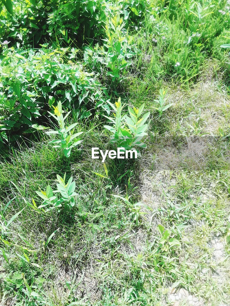 growth, plant, nature, green color, no people, outdoors, high angle view, day, leaf, beauty in nature, freshness, fragility, grass, close-up