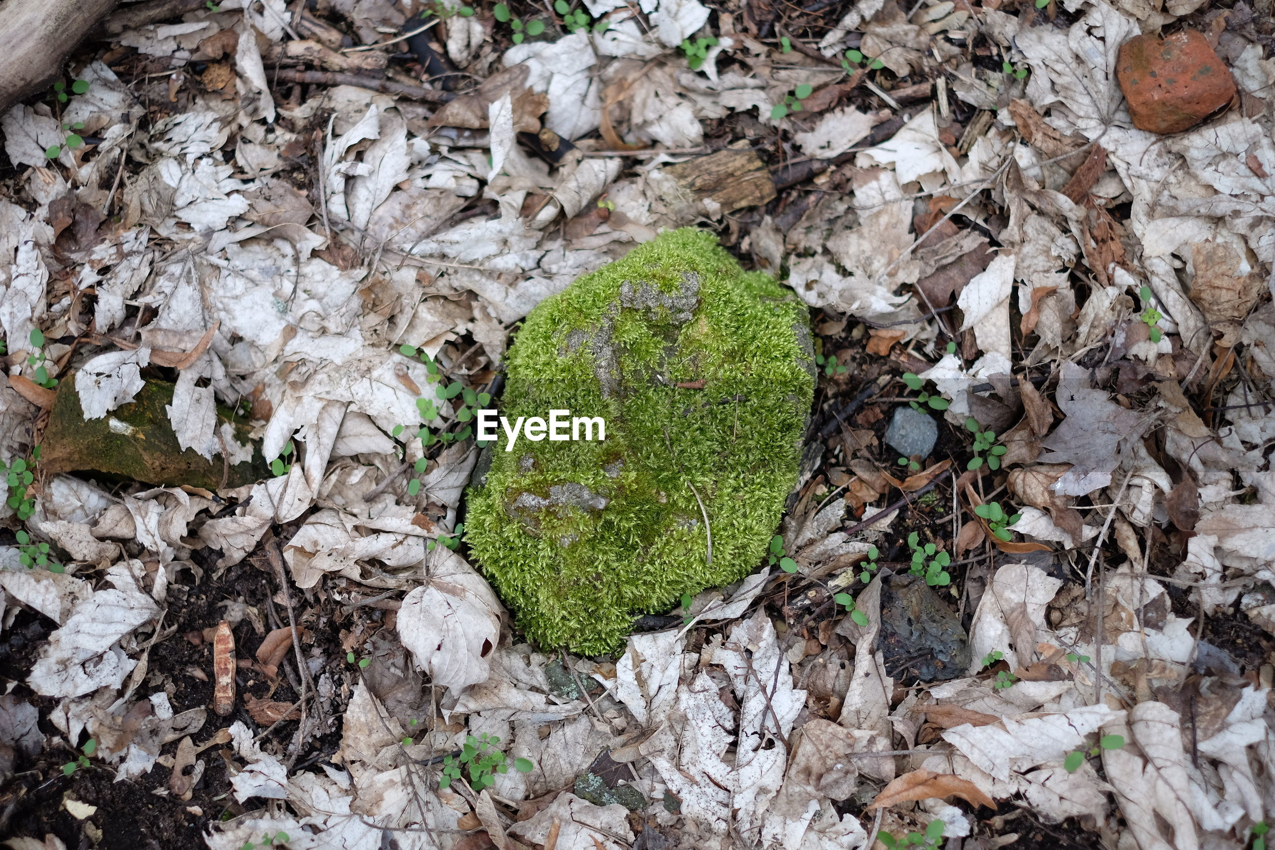 Moss covered rock on field