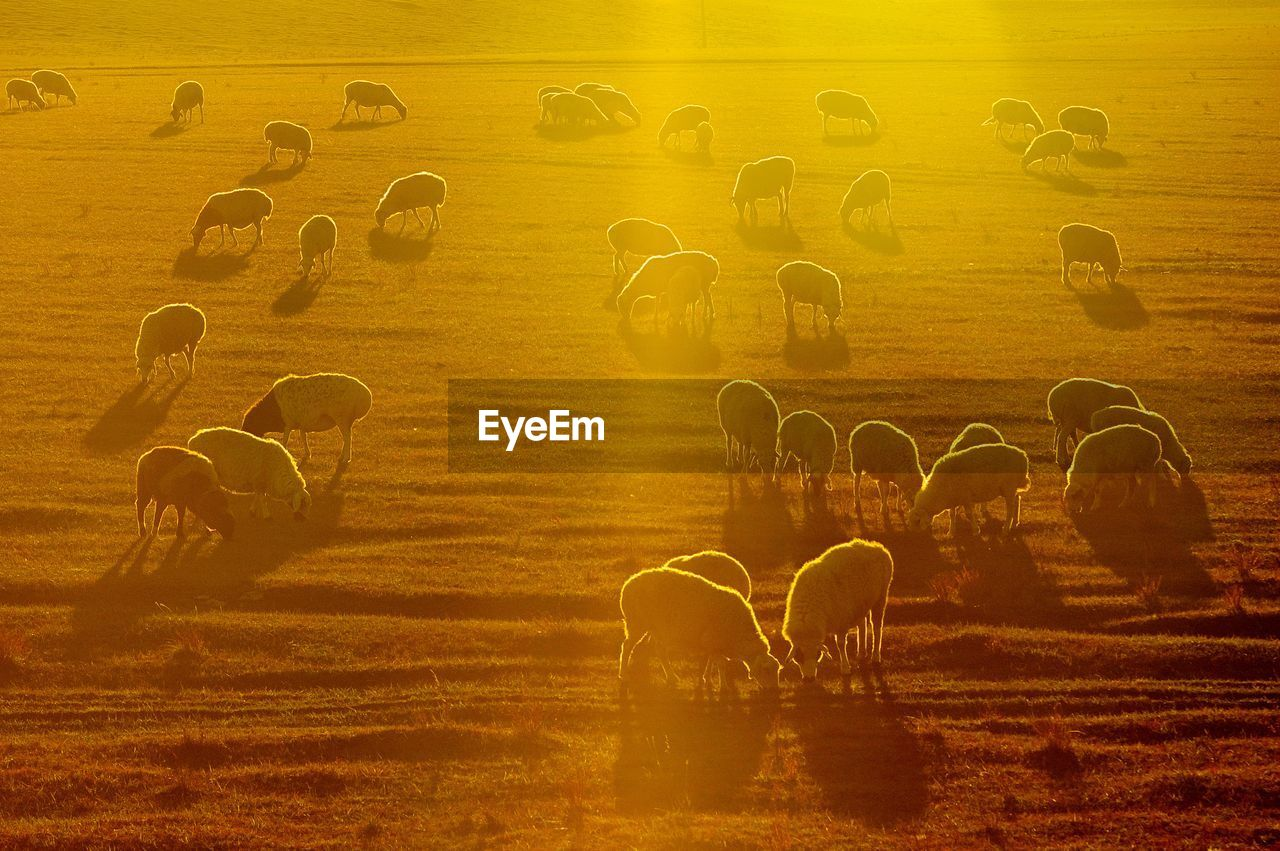 large group of animals, animal themes, outdoors, sunset, nature, togetherness, real people, mammal, day, beauty in nature