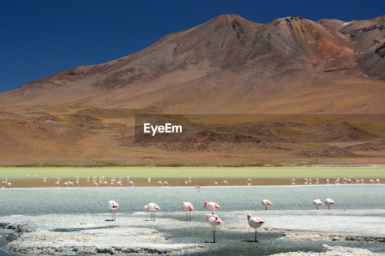 View Of Flamingos By Laguna Hedionda Against Mountain