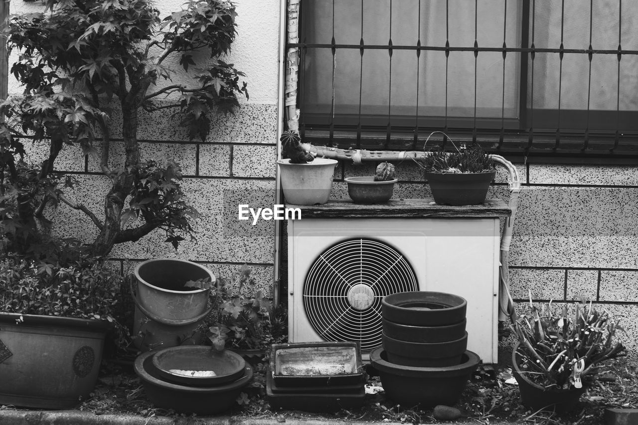 Potted plants in front of wall