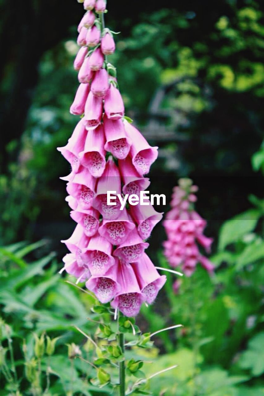 growth, nature, pink color, plant, beauty in nature, flower, no people, fragility, outdoors, day, freshness, blooming, close-up, flower head