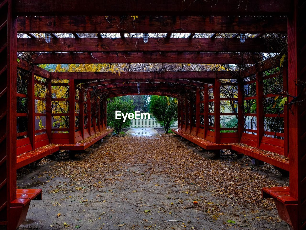 the way forward, direction, architecture, plant, built structure, no people, day, nature, diminishing perspective, tree, footpath, outdoors, leaf, plant part, autumn, park, connection, arch, tranquility, bridge, change, long