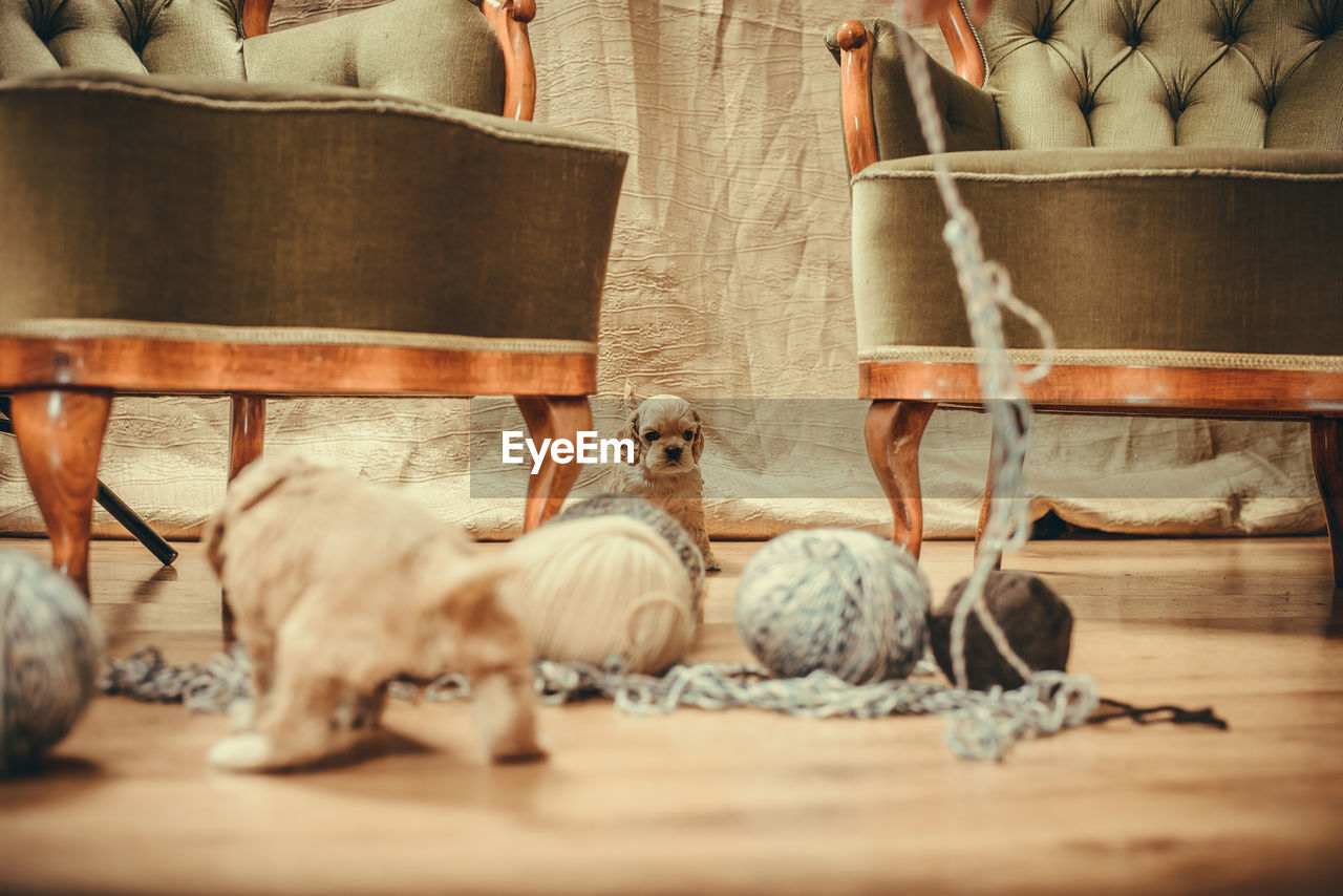 group of animals, animal, selective focus, animal themes, vertebrate, wood - material, indoors, no people, bird, medium group of animals, animal wildlife, day, mammal, relaxation, table, young animal, domestic, domestic animals, food, surface level, jute
