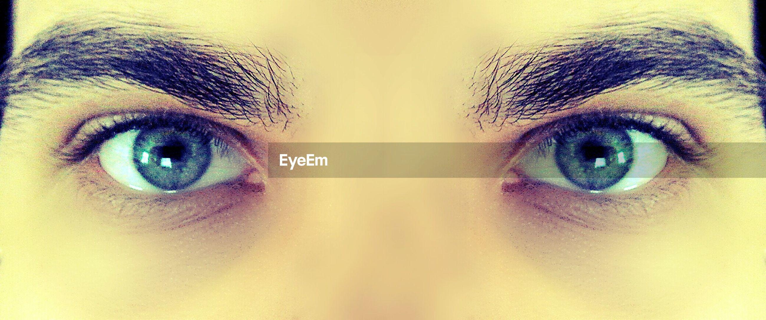 human eye, looking at camera, portrait, close-up, eyelash, eyesight, sensory perception, part of, staring, animal eye, extreme close-up, full frame, human face, blue eyes, headshot, extreme close up, eyeball