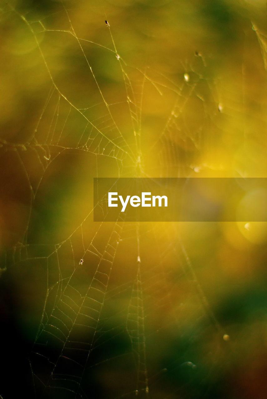 FULL FRAME SHOT OF DEW DROPS ON SPIDER WEB