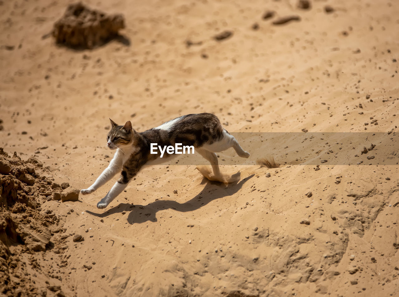 HIGH ANGLE VIEW OF A DOG RUNNING ON SAND
