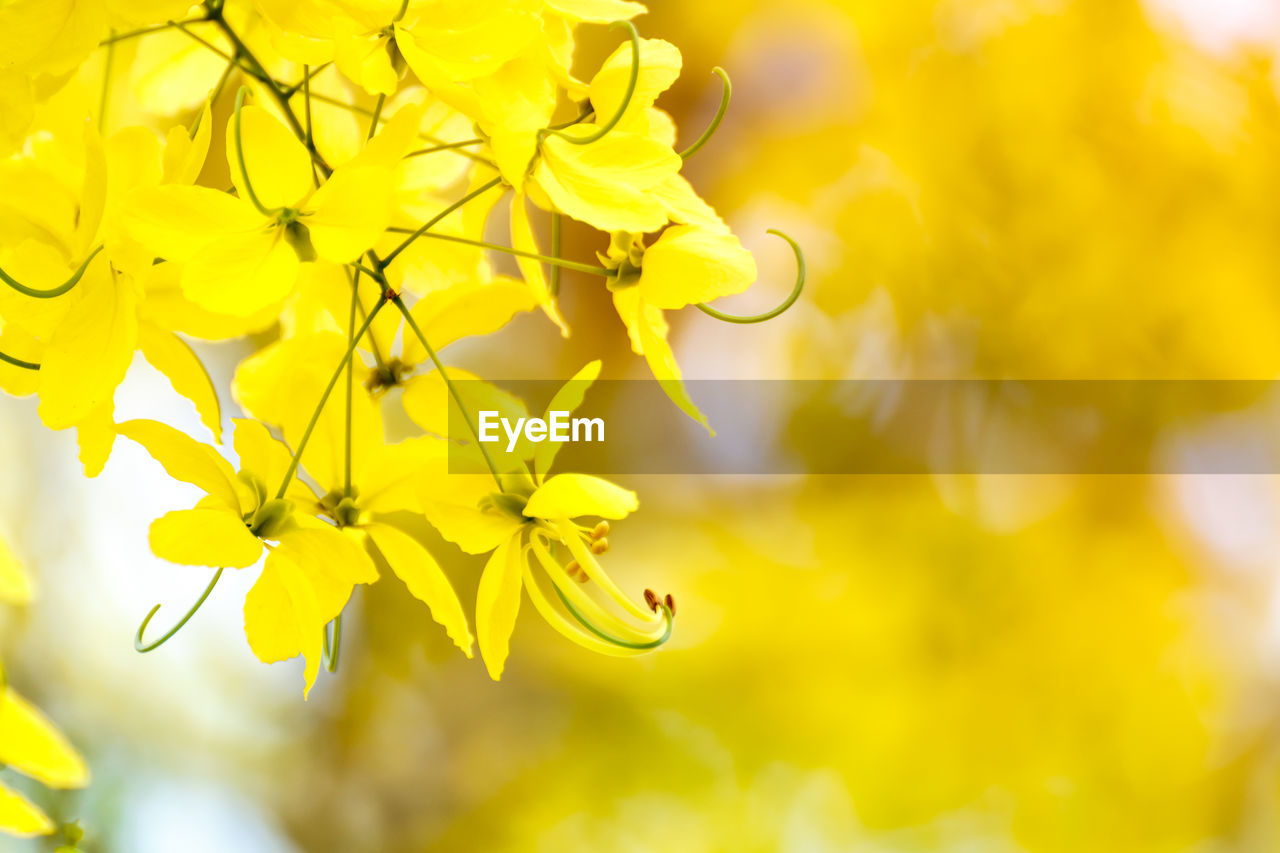 yellow, plant, beauty in nature, growth, flower, fragility, flowering plant, vulnerability, nature, freshness, close-up, no people, petal, selective focus, day, outdoors, flower head, inflorescence, plant part, leaf, bright