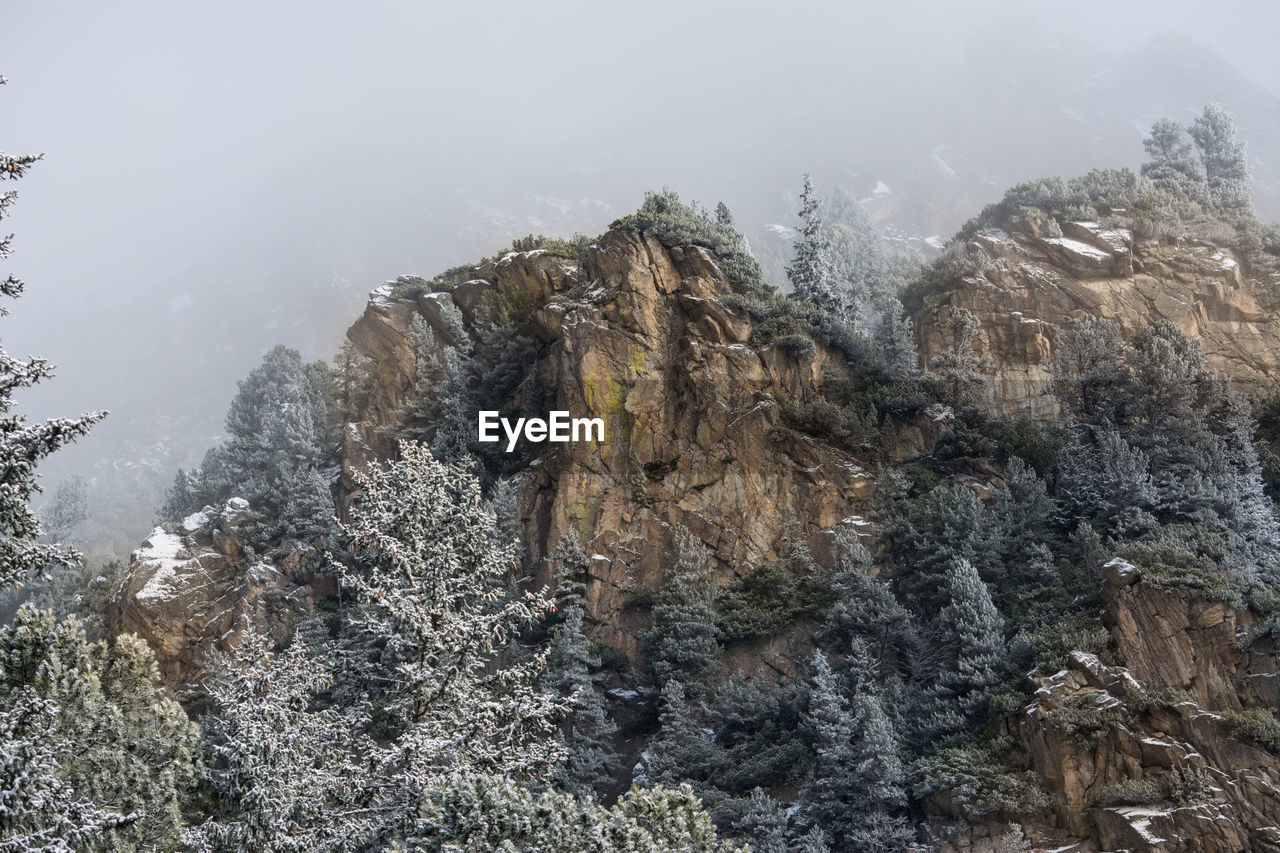 Plants on rock formation during foggy weather