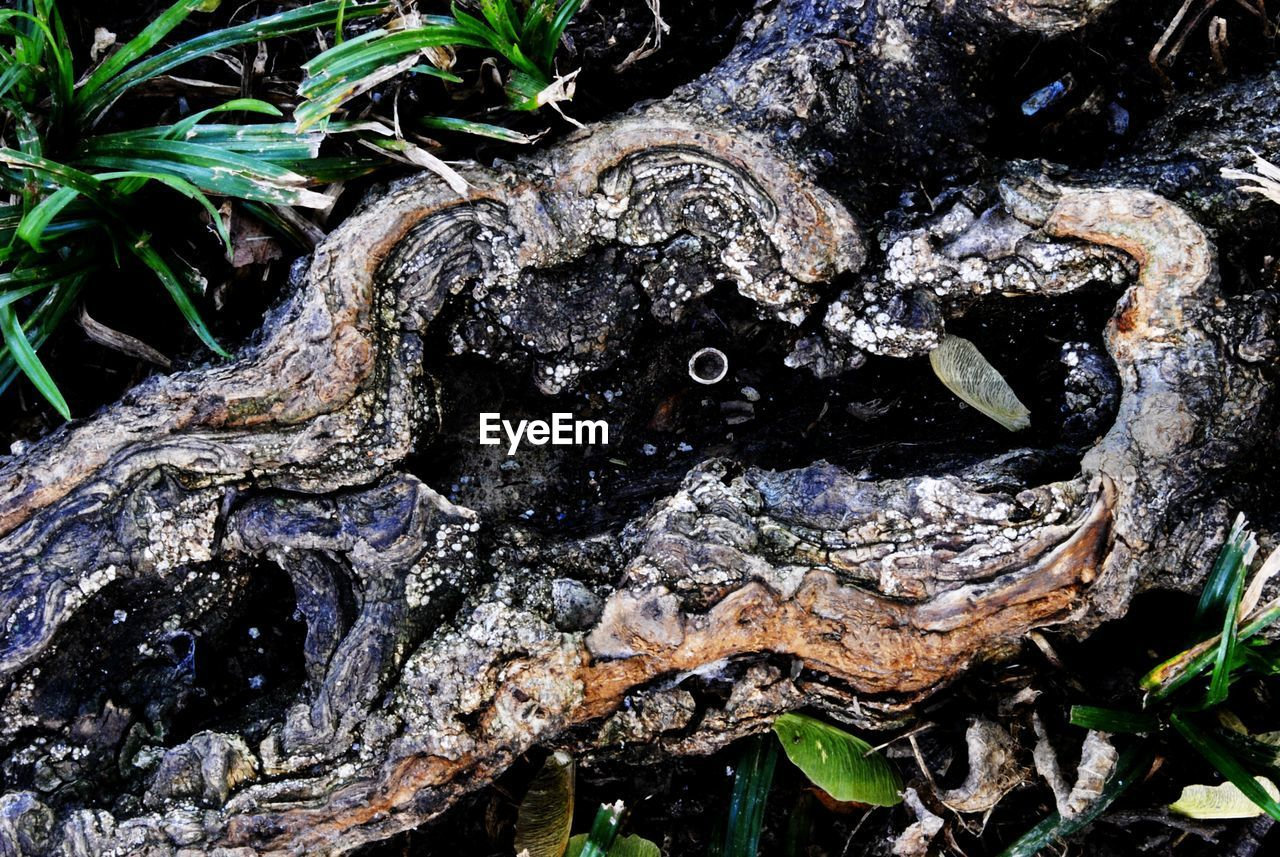 tree trunk, no people, nature, rough, textured, day, outdoors, bark, growth, close-up, tree, beauty in nature