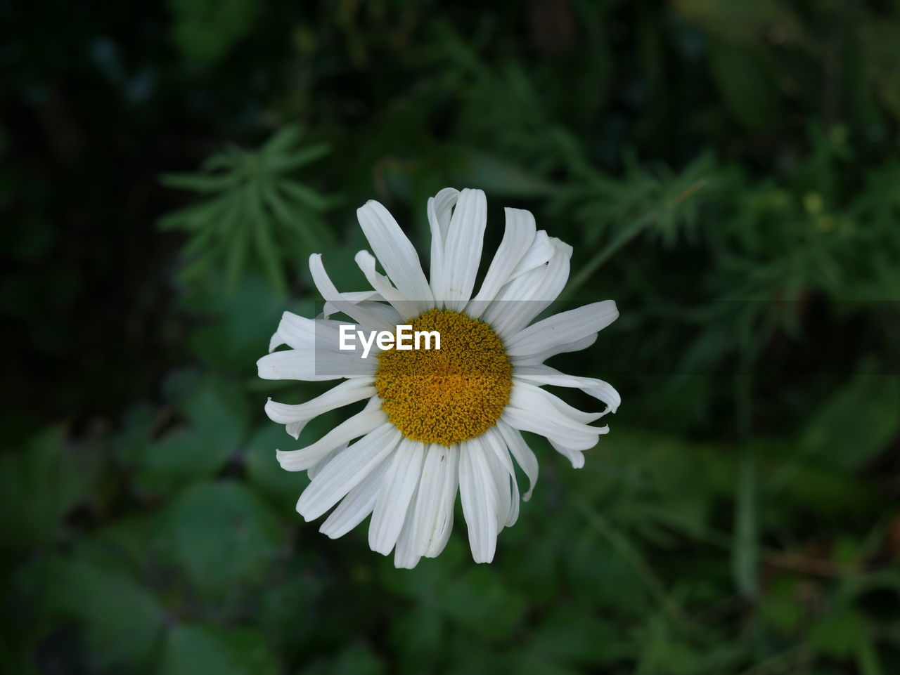 flower, growth, petal, nature, beauty in nature, fragility, blooming, individuality, plant, flower head, freshness, white color, no people, close-up, outdoors, day