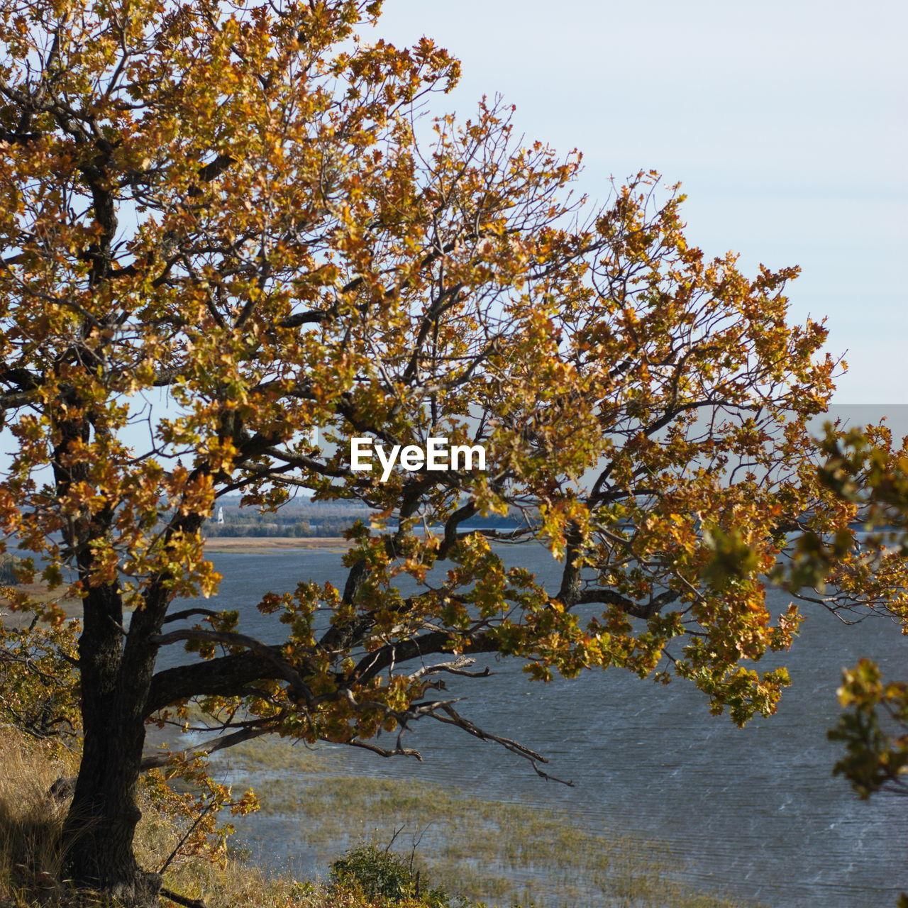 TREES IN WATER AGAINST SKY
