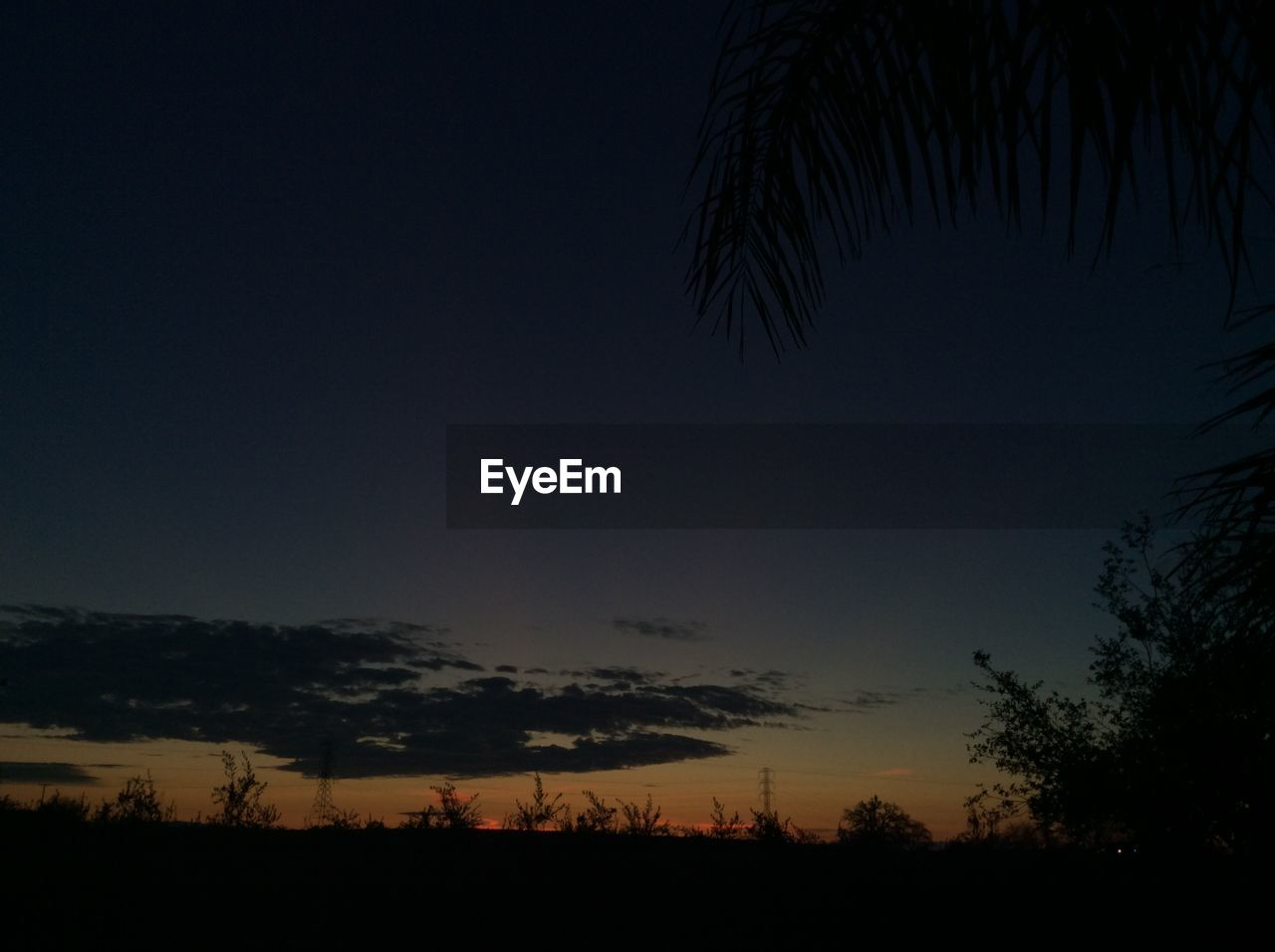 silhouette, tree, nature, beauty in nature, scenics, tranquility, no people, tranquil scene, sunset, sky, outdoors, palm tree, growth, day