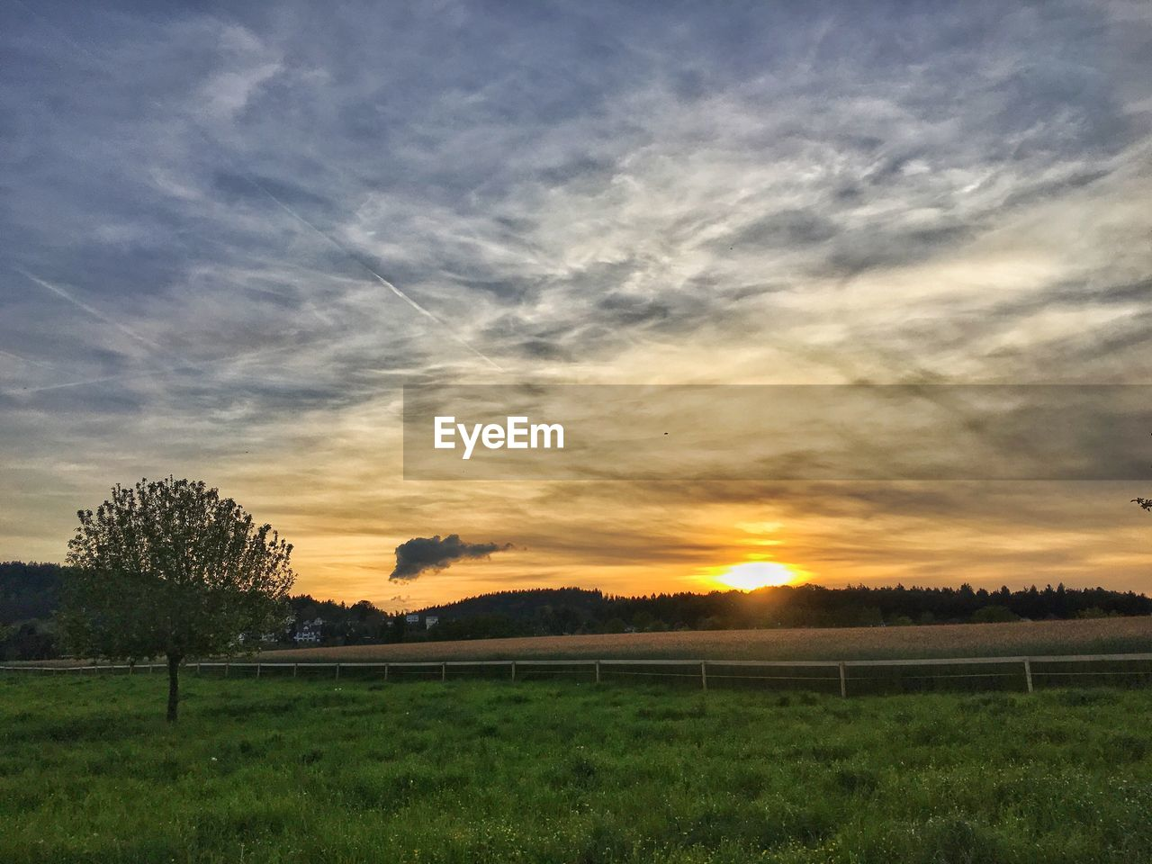 sunset, field, beauty in nature, scenics, nature, grass, tranquil scene, landscape, tranquility, no people, tree, sky, sun, outdoors, cloud - sky, rural scene, day