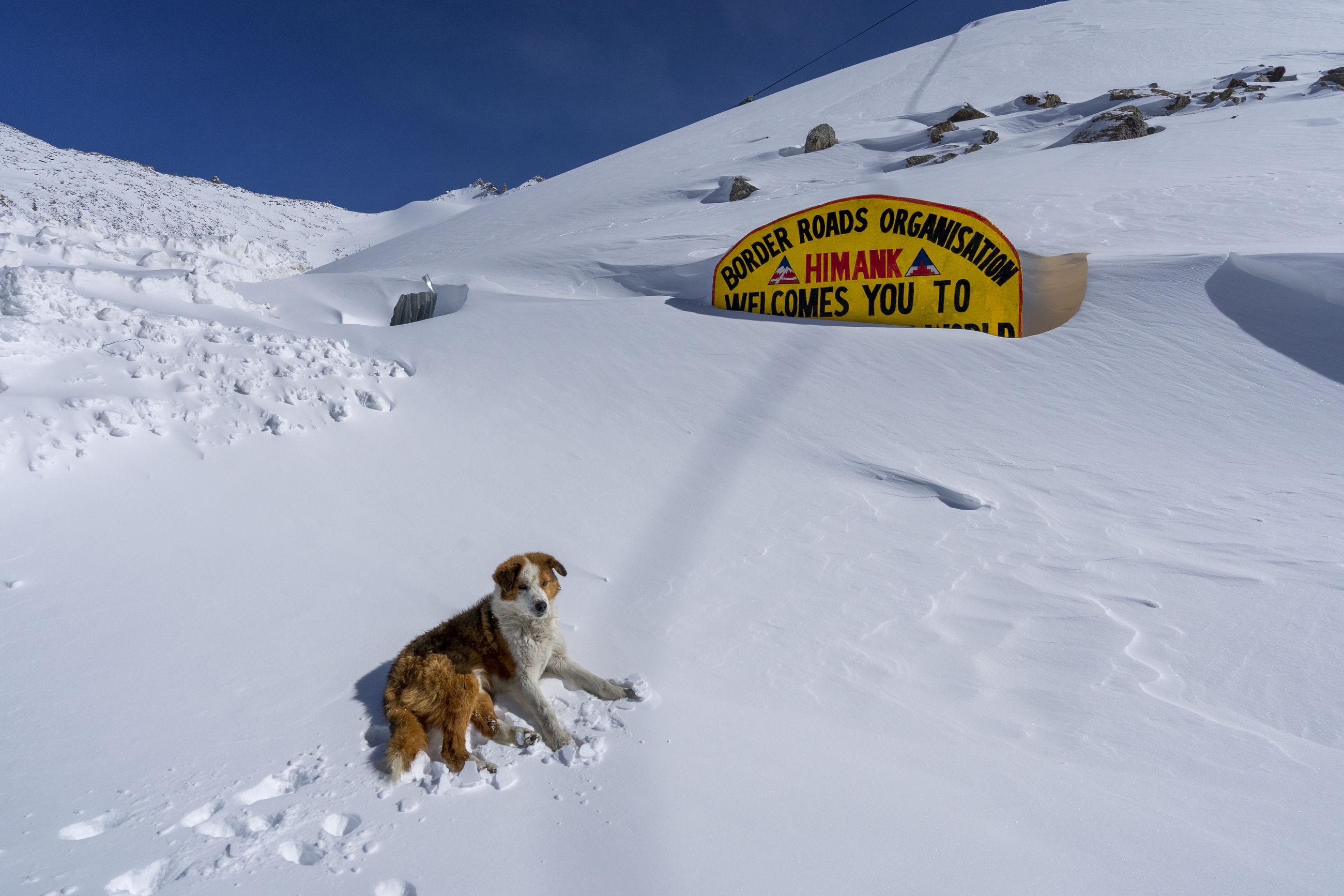 HIGH ANGLE VIEW OF A DOG ON SNOW