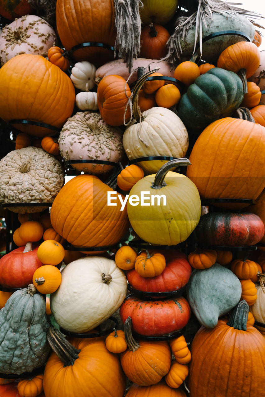 pumpkin, food and drink, choice, variation, food, healthy eating, vegetable, large group of objects, freshness, abundance, for sale, retail, market, wellbeing, squash - vegetable, no people, market stall, orange color, day, high angle view, sale, outdoors, retail display, variety