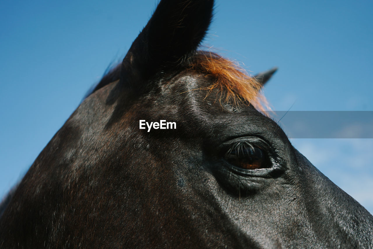 CLOSE-UP OF A HORSE EYE AGAINST THE SKY