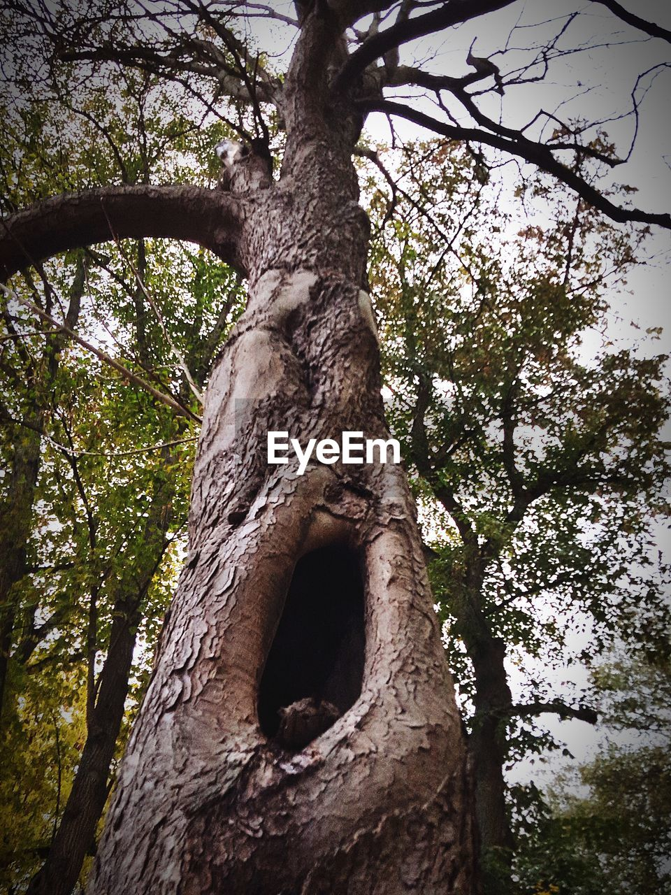 tree, plant, tree trunk, trunk, low angle view, branch, growth, nature, day, no people, sky, outdoors, tranquility, land, forest, beauty in nature, hole, textured, bark, focus on foreground, directly below, tree canopy