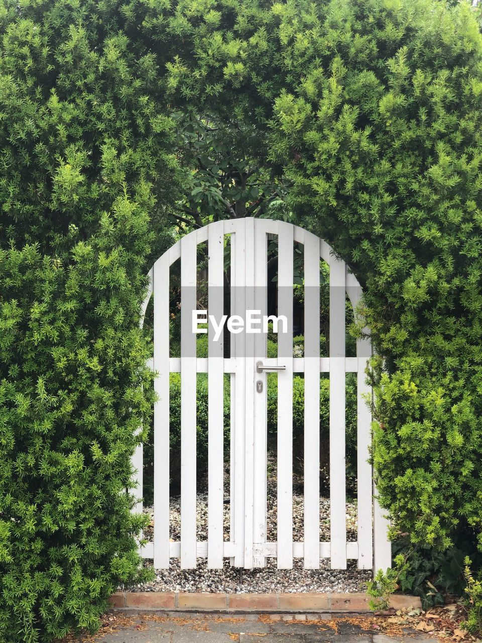 plant, green color, tree, no people, day, nature, growth, white color, safety, outdoors, architecture, protection, built structure, security, land, barrier, fence, gate, closed, boundary, hedge
