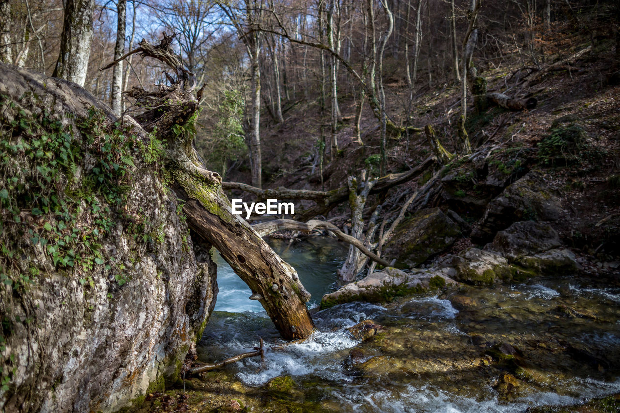 tree, water, forest, land, plant, nature, no people, tranquility, day, scenics - nature, rock, stream - flowing water, beauty in nature, river, non-urban scene, flowing water, rock - object, outdoors, environment, flowing, woodland, rainforest