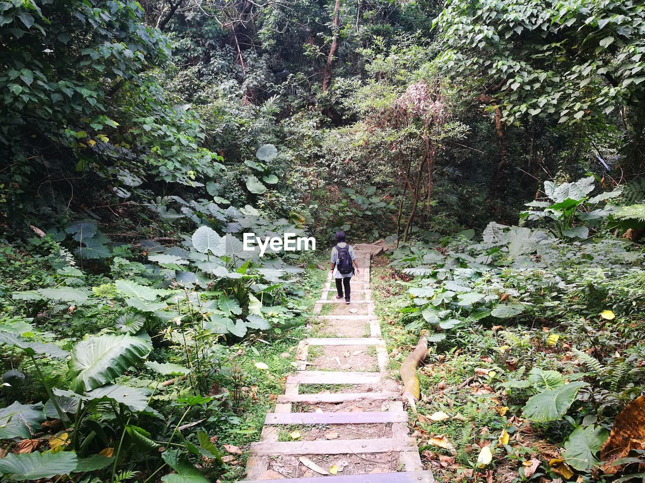full length, rear view, the way forward, walking, forest, tree, nature, steps, day, hiking, plant, real people, beauty in nature, outdoors, men, tranquility, two people, adventure, footbridge, adult, people