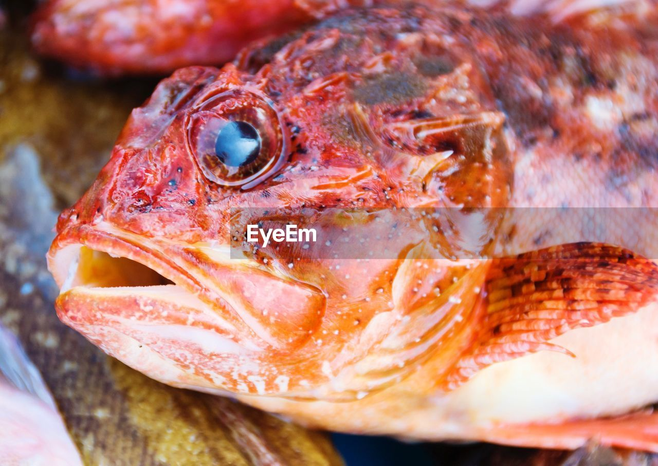close-up, animal, vertebrate, animal themes, fish, food and drink, seafood, food, one animal, no people, for sale, freshness, indoors, wellbeing, retail, selective focus, animal body part, animals in the wild, marine, animal head, animal eye, animal mouth