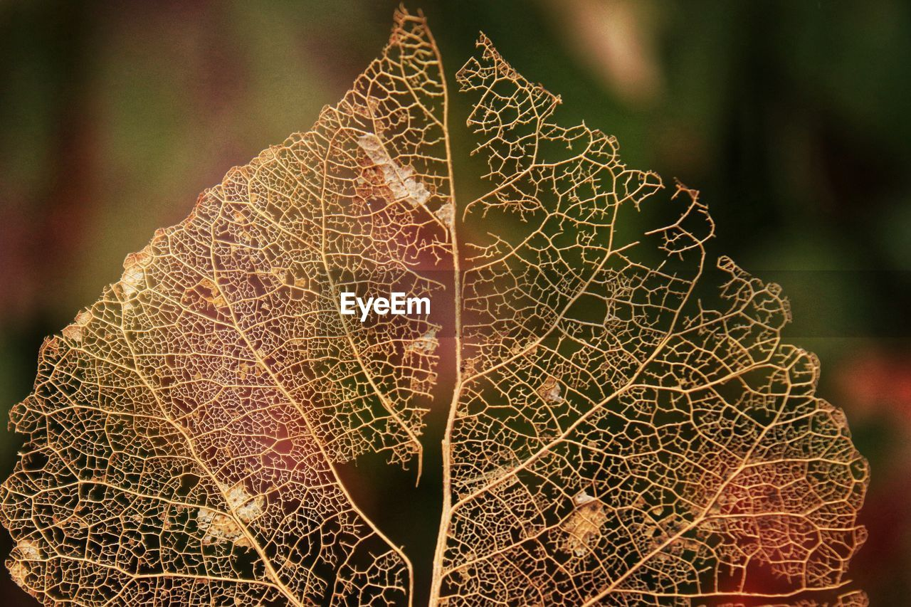 close-up, plant, leaf, plant part, focus on foreground, nature, growth, leaf vein, no people, day, fragility, beauty in nature, pattern, tree, vulnerability, natural pattern, outdoors, green color, autumn, dry, leaves