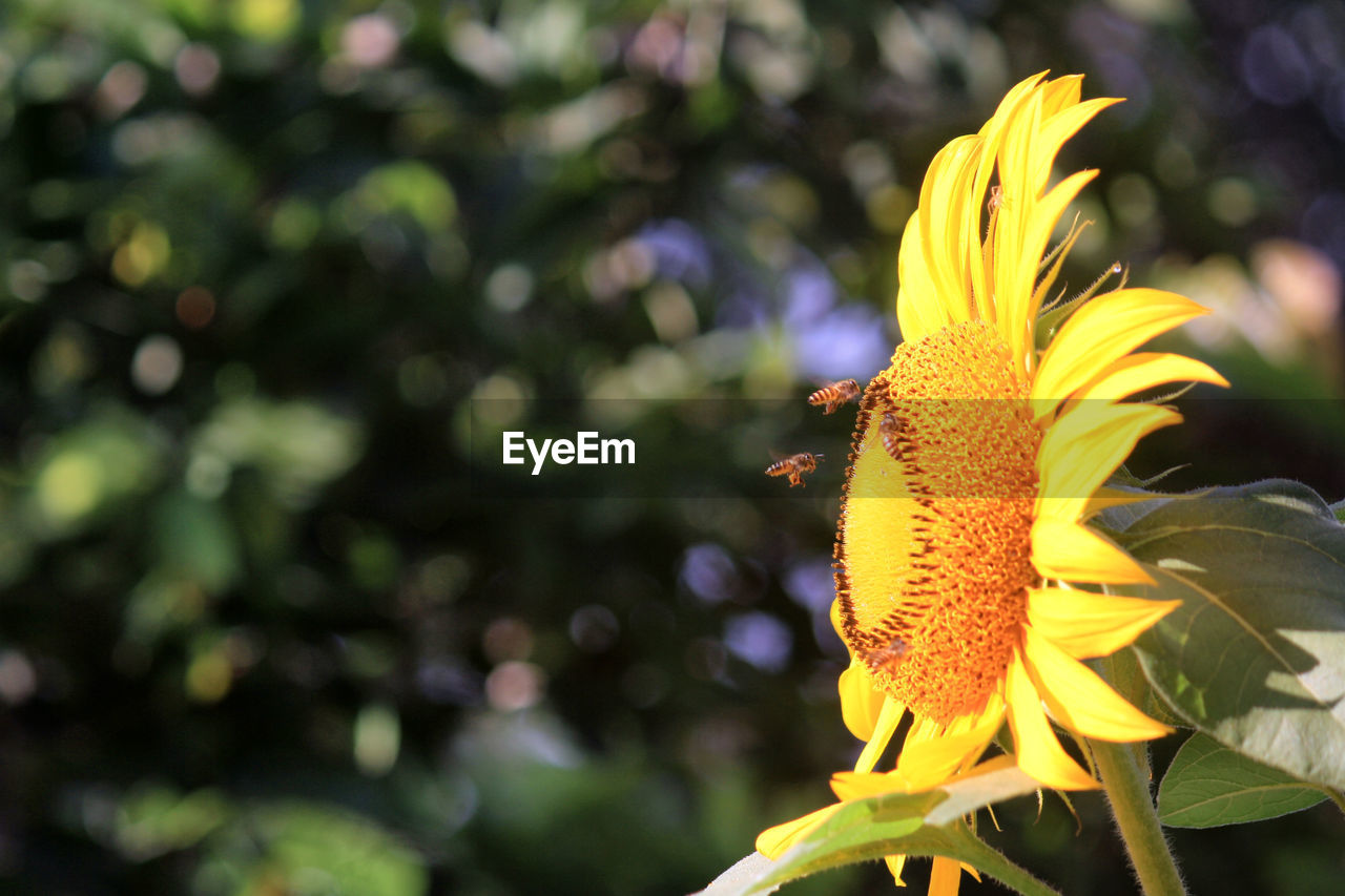flowering plant, flower, plant, fragility, vulnerability, freshness, beauty in nature, petal, growth, flower head, close-up, inflorescence, yellow, focus on foreground, nature, day, no people, pollen, botany, outdoors, pollination