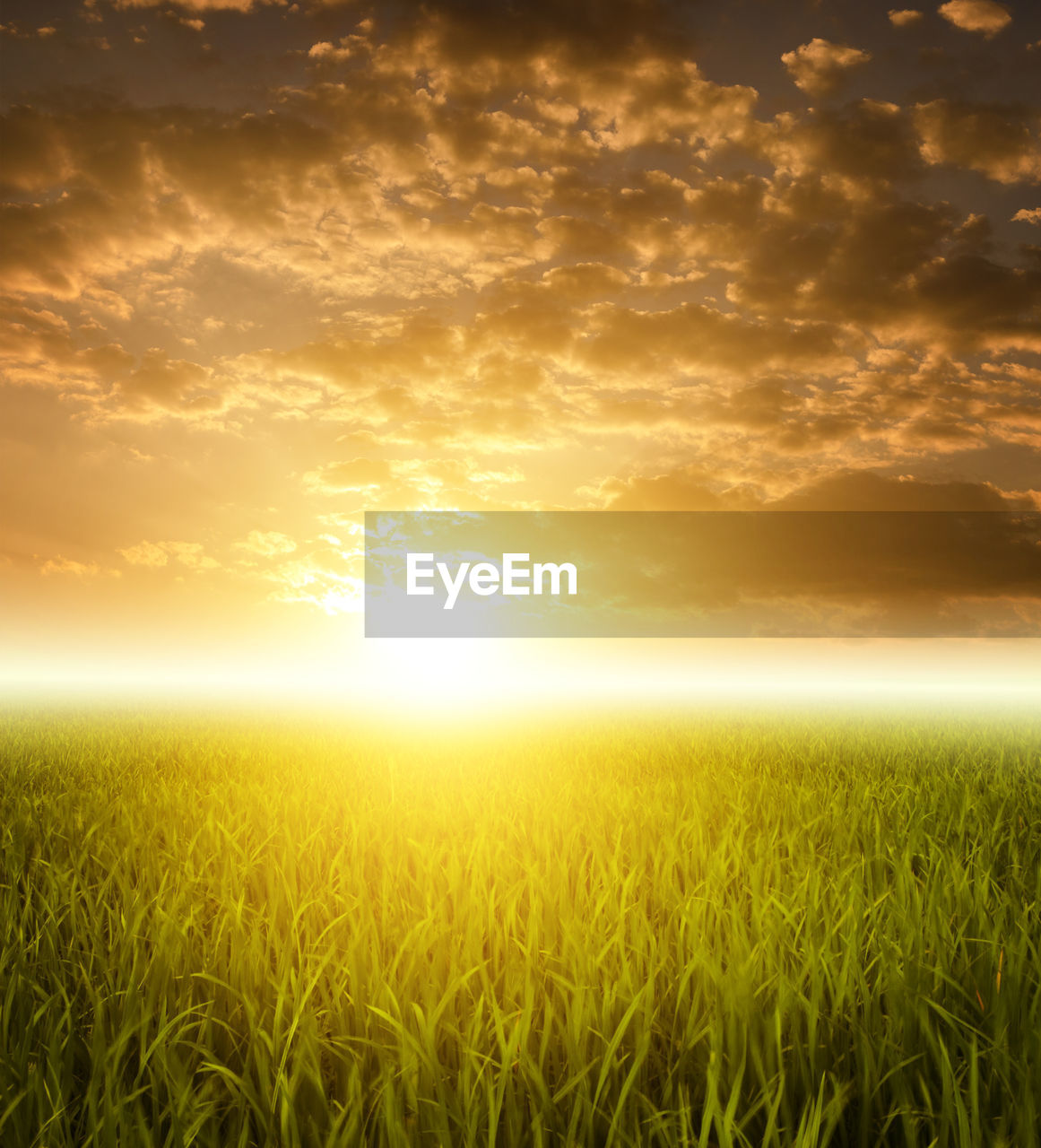 sunset, sky, field, land, cloud - sky, plant, beauty in nature, scenics - nature, crop, tranquility, agriculture, landscape, tranquil scene, sunlight, sun, rural scene, nature, environment, growth, cereal plant, no people, lens flare, outdoors, bright